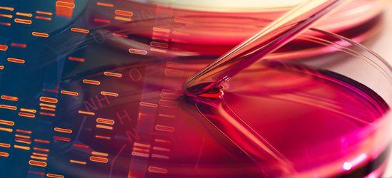 Nasdaq Biotechnology