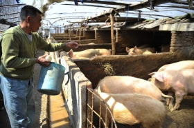 Эпидемия АЧС в Китае
